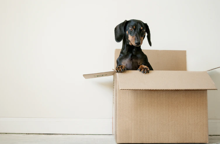 3 Things You Need to Consider Before Moving During a Health Crisis